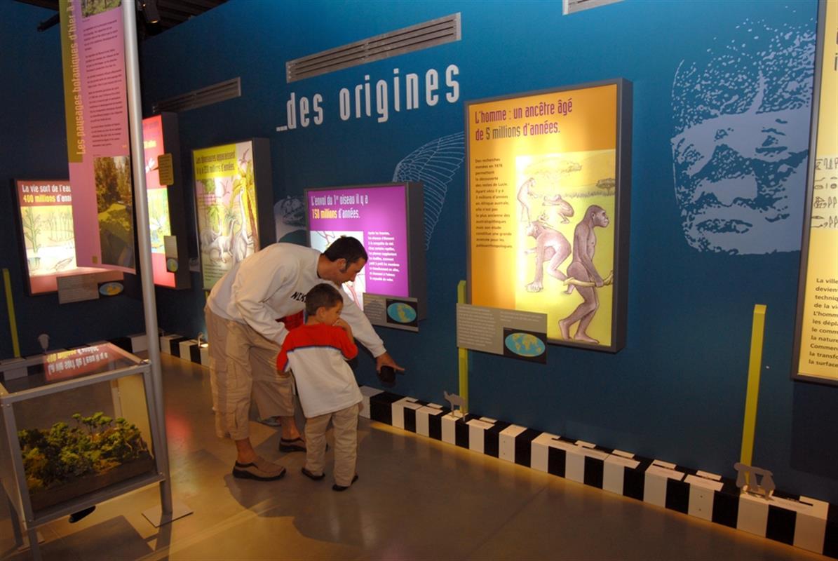 Musee Des Libellules Visiter La Vendee Campilo